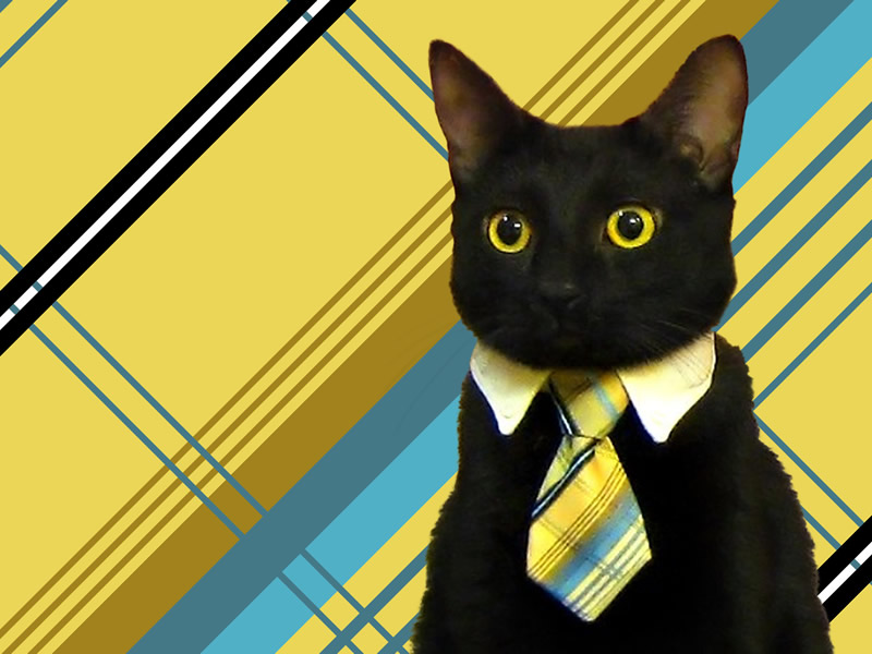Business-Cat-2
